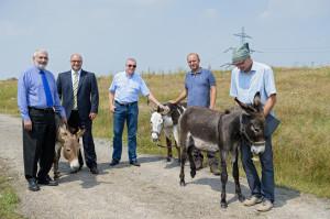 Esel mähen das Gras auf der alten Deponie