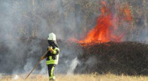 Haßloch –  Wiese im südlichen Sägmühlweg in Brand