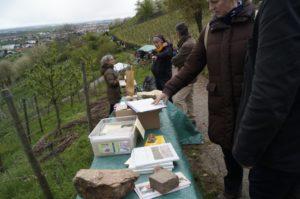 Weinheim – Vorfreude auf das Blütenwegfest ILEK – Buntes Programm am 23. April zwischen Weinheim und Großsachsen