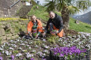 Heidelberg – Es blüht und sprießt wieder in Heidelberg –  Zum Start in die Frühlingssaison setzen städtische Gärtnerinnen und Gärtner bunte Akzente in der Stadt