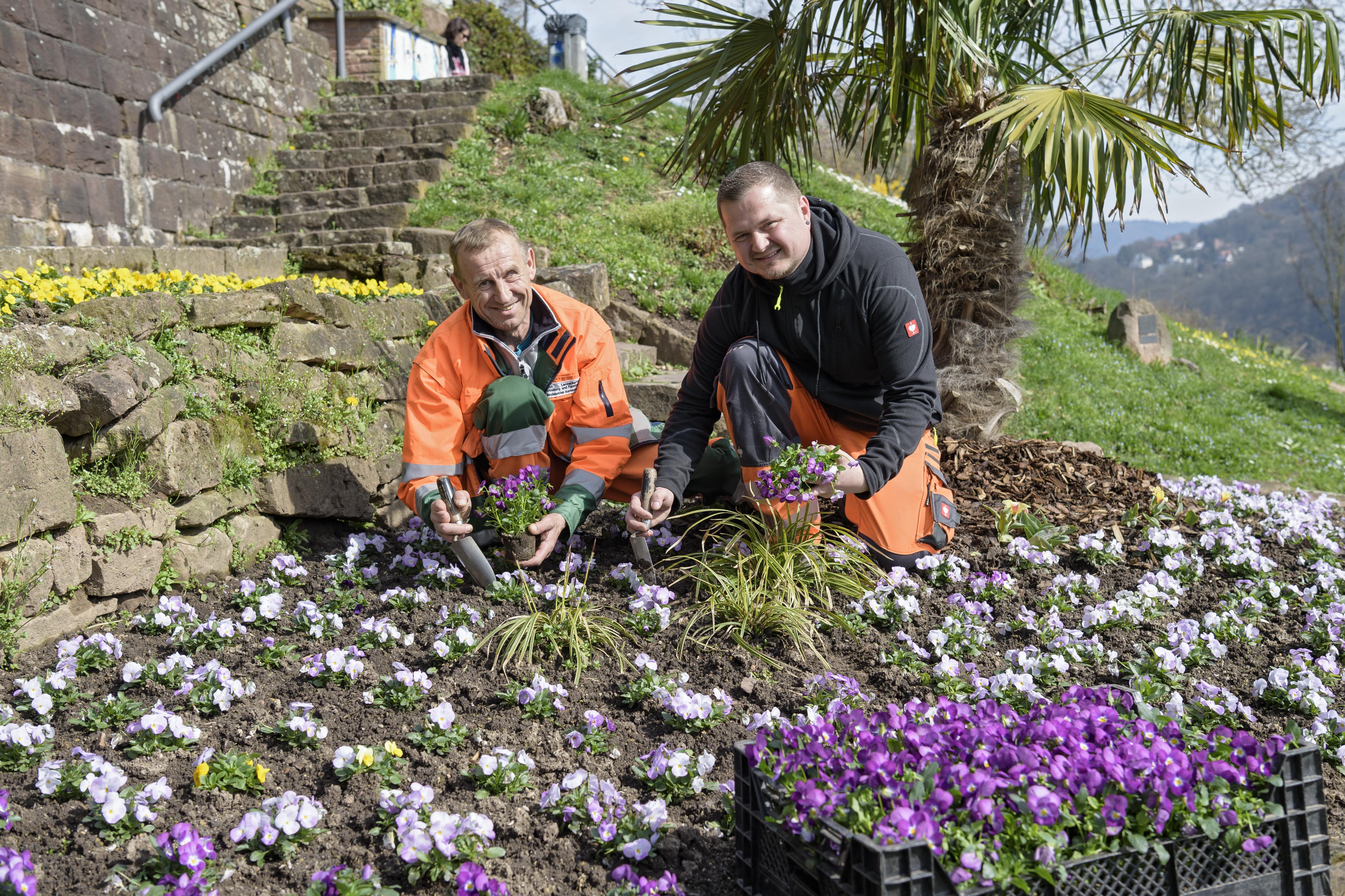 Die Mitarbeiter des Landschafts- und Forstamtes bringen mit vielen bunten Blumen den Frühling in die Stadt.   Foto: Philipp Rothe, 23.03.2017