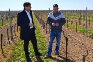 Landau – Frostnächte richten Schäden in Weinbergen und Feldern an: Oberbürgermeister Hirsch informiert sich vor Ort über Situation der Landauer Winzer und Landwirte