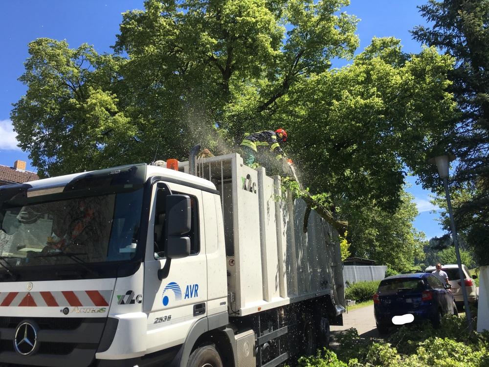 Baum auf Müllfahrzeug (002)