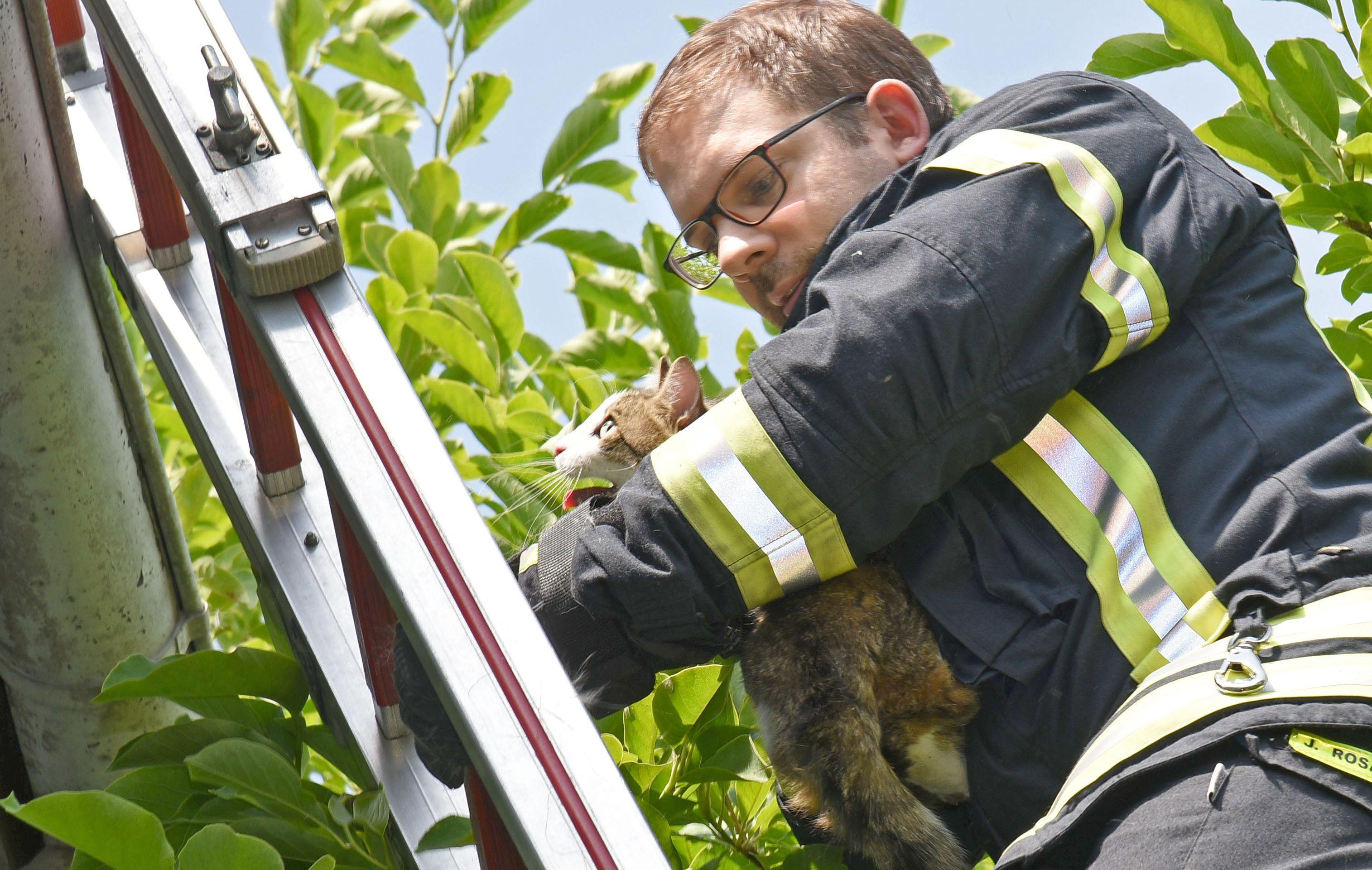 B - Feuerwehr ED-NE - Katzenrettung in NE - Bild FWEN