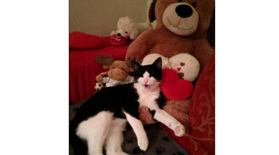 Katze-Vermisst