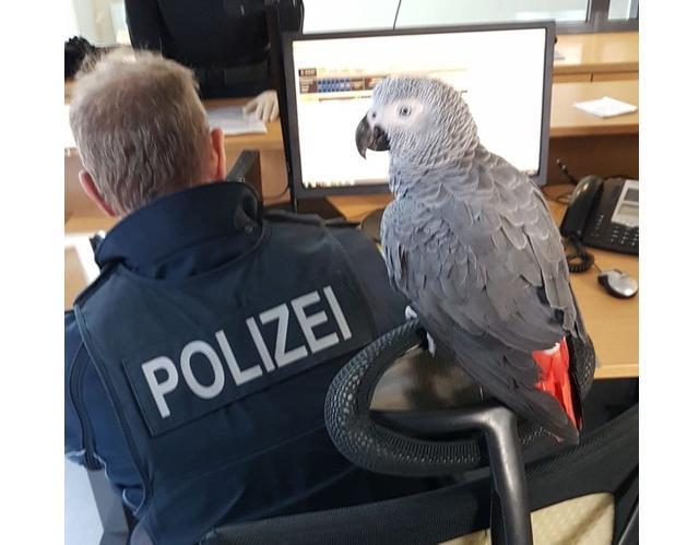 Foto: Bundespolizei Kaiserslautern