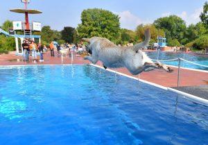 Heidelberg – Wenn Hundeliebhaber sich treffen: Hundeschwimmen ein voller Erfolg