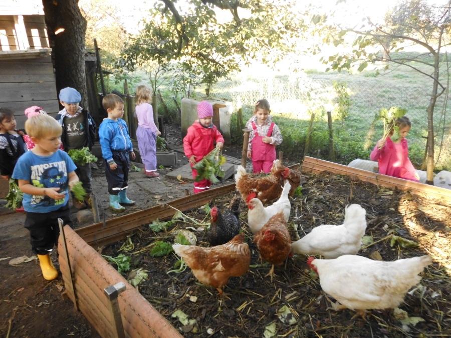 Hockenheim projekt im park kindergarten besch ftigt sich for Herbstprojekt im kindergarten