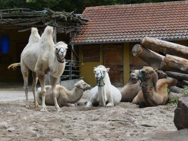 Heidelberg – Der Oma-Opa-Enkel-Tag im Zoo Heidelberg: unvergessliche Tour mit tierischen Erlebnissen für Jung und Alt