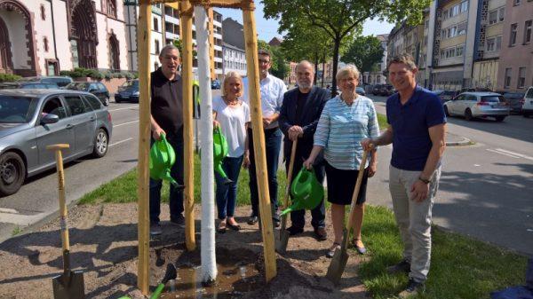 Mannheim – Baumpflanzungen zum Tag des Baumes. Neue Bäume für den Luisenring und den Bürgerpark