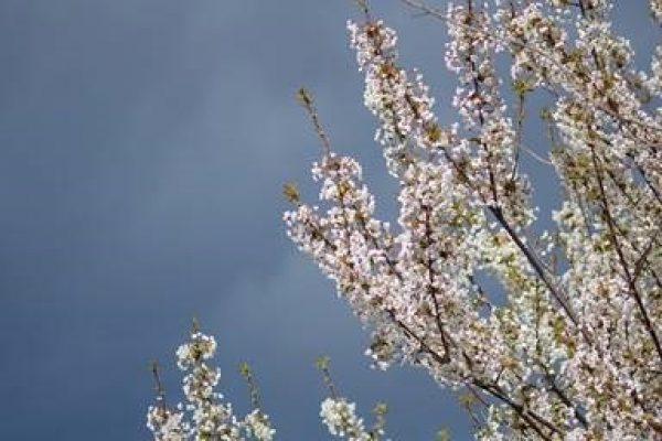 Ludwigshafen – Aprilsommer endet mit Blitz und Donner –  Am Wochenende bis 30 Grad, dann markante Abkühlung