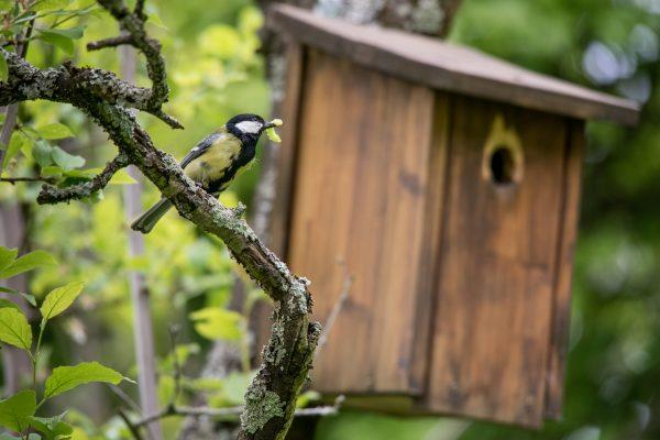 Heidelberg – Insekten retten: mehr Natur am Haus und im Garten! Kostenlose Beratung für Haus- und Gartenbesitzer für das Projektgebiet Südstadt