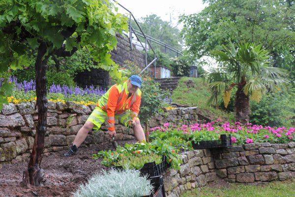 Heidelberg – Der Sommer zieht in die Stadt! Städtische Gärtnerinnen und Gärtner sorgen mit der Sommerbepflanzung überall für Farbtupfer