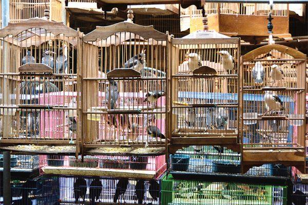 Heidelberg – Zoos engagieren sich für Artenschutz weltweit! Zoo Heidelberg initiiert Silent Forest-Kampagne für asiatische Singvögel
