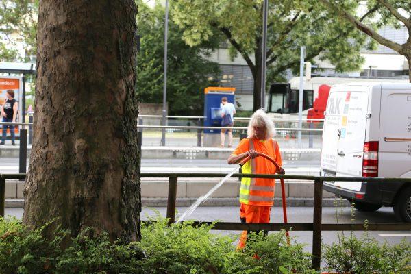 Heidelberg – Die Natur hat Durst: Heidelberger Stadtgärtner sind mit Schläuchen und Tankwagen im Dauereinsatz