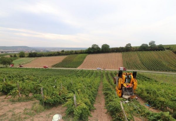 Bad Kreuznach – Tödlicher Unfall im Weinberg