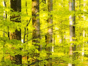 """Heidelberg – Das geheimnisvolle Leben der Bäume –  Fotoausstellung von Ralf Kuhlen zur Ehrung Heidelbergs als """"europäische Waldhauptstadt 2018"""""""