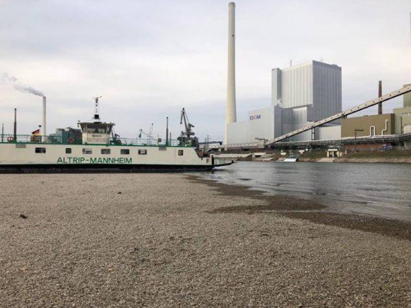 Rhein-Pfalz-Kreis –  Niedrigwasser im Rhein – Rheinfähre Altrip ausser Betrieb