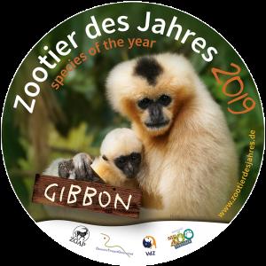 """Heidelberg – Der Gibbon ist das """"Zootier des Jahres 2019"""""""