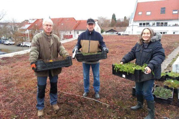 Rhein-Pfalz-Kreis – Pflanzaktion auf dem Dachgarten des Palatinums in Mutterstadt