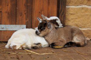 Landau – Kinderferienbetreuung im Zoo Landau in den Winterferien und an Fasching 2019