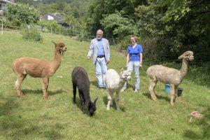 """Heidelberg – Projekt """"Weidegemeinschaft"""": mit Kühen, Schafen und Alpakas gegen Wildschwein & Co: Bürgermeister Erichson besuchte bei seiner Sommertour die Alpakafarm Hirtenaue in Ziegelhausen"""