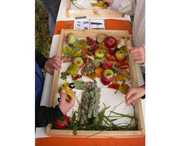 Lambrecht -Obst-Mitmachtag im und am Biosphärenhaus in Fischbach – Selbstgemachte Gummibärchen, Infos und spannende Aktionen beim Biosphärenhaus in Fischbach