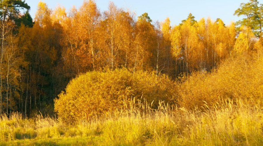 Ludwigshafen – Goldener Oktober