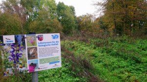 """Ladenburg – """"Natur nah dran""""-Flächen in Ladenburg sind Kinderstuben für Wildbienen und Schmetterlinge"""