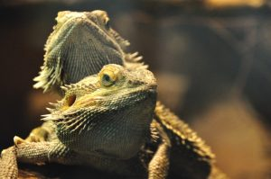 """Landau – """"Terrarientiere richtig halten und pflegen"""" – Zooschule Landau und DGHT bieten Workshop für Kinder an"""
