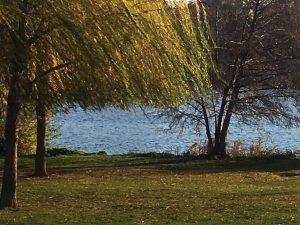 Heidelberg – Achtung, Heidelberger Neckarwiese bleibt gesperrt!  Beschränkte Aufenthaltsverbote für weitere Grünanlagen – Spazieren und Bewegen bleibt dort aber möglich