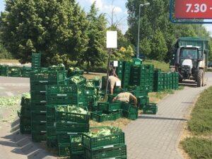Rhein-Pfalz-Kreis – Verlorener Blumenkohl sorgte kurzfristig für Verkehrsbehinderungen in Dannstadt-Schauernheim