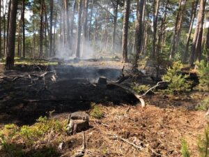 Schweigen – Bereits zum vierten Mal mussten Feuerwehren zu einem Waldbrand in Schweigen-Rechtenbach ausrücken