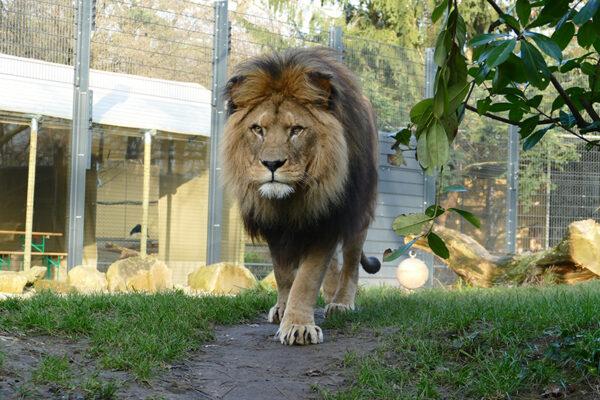 Heidelberg – 82 Prozent der Deutschen von Zoos überzeugt! Forsa-Studie dokumentiert hohe Beliebtheit