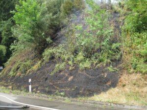 Annweiler – Flächenbrand konnte durch die Feuerwehr schnell eingedämmt werden