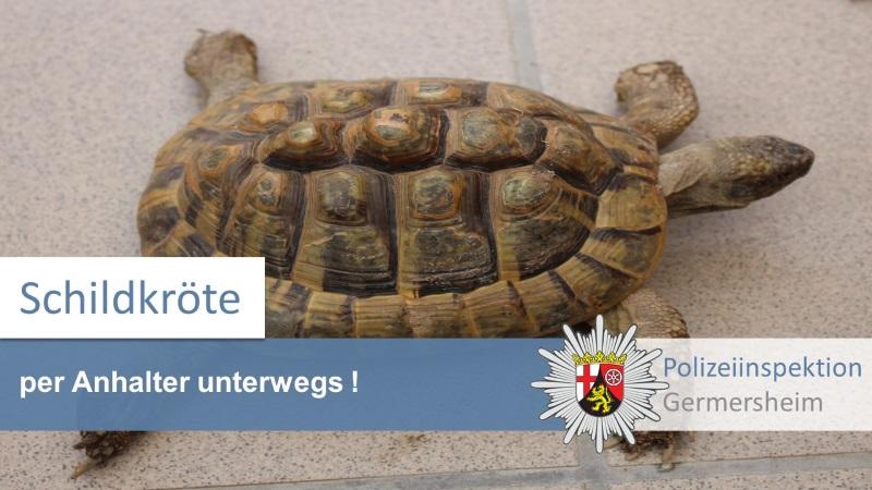Lingenfeld – Schildkröte per Anhalter unterwegs