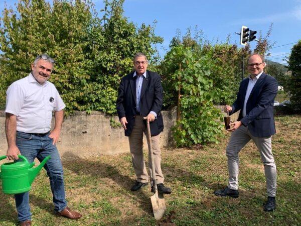 Berlin/Dossenheim – Prof. h. c. Dr. Karl A. Lamers MdB(CDU) pflanzt Baumsetzling im Wahlkreis