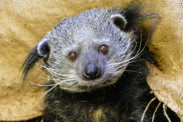 Heidelberg – Ein Stück Zoo für Zuhause: Tierpatenschaften, Zoo-Gutscheine oder Online-Videos