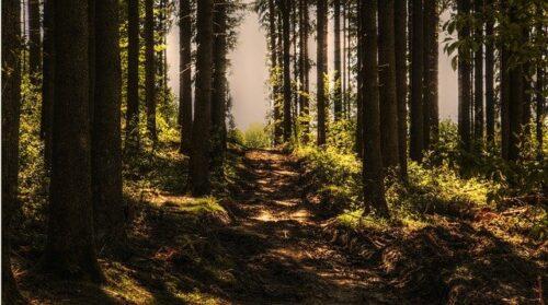 """Heidelberg – Wiesen und Wälder: """"Natürlich Heidelberg"""" war 2020 sehr beliebt – Anmeldungen für 2021 gestartet! Förderung der Umweltbildung seit 15 Jahren"""
