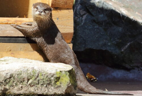 Landau – Frühling im Zoo erleben – Tolle Workshops in den Osterferien