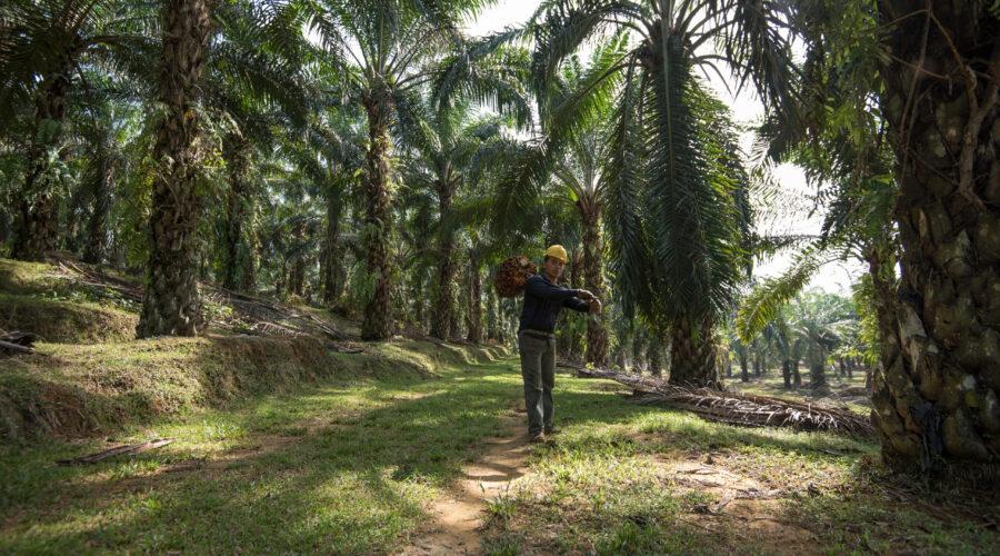 Ludwigshafen – BASF erreicht ihre 2020 Palm-Selbstverpflichtung