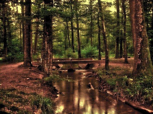 Ludwigshafen – Waldnacht im Wildpark ist abgesagt!