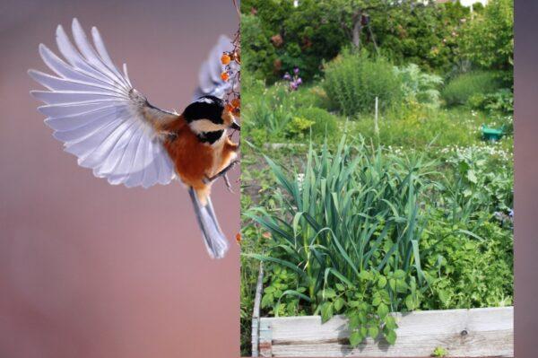 Lambrecht– Teilnahme am Garten-Wettbewerb bis 30. April möglich