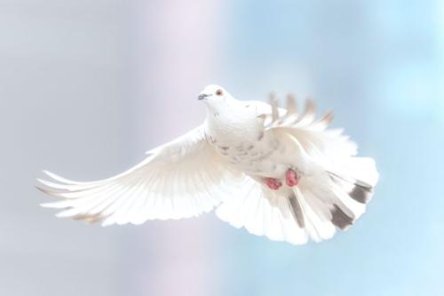 Mannheim – Das Wunder von Pfingsten – der Traum der Verständigung