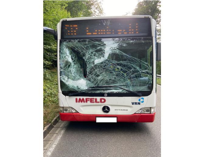 Elmstein – Hirsch im Linienbus