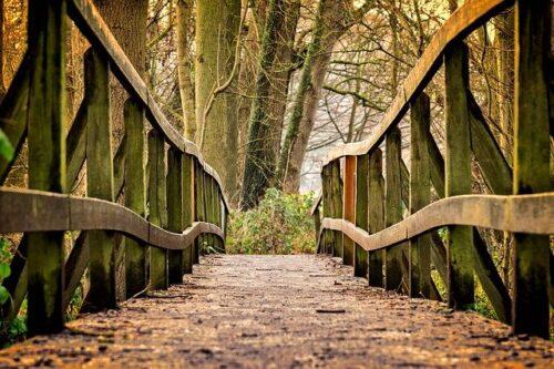 Heidelberg – Abenteuer Wald: Ferienangebot des Hauses der Jugend im Herbst