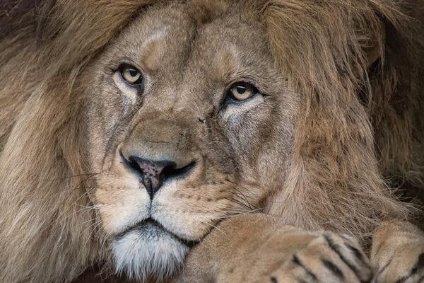 Heidelberg – #Sturmtief: Zoo Heidelberg bleibt am 21.10.2021 geschlossen